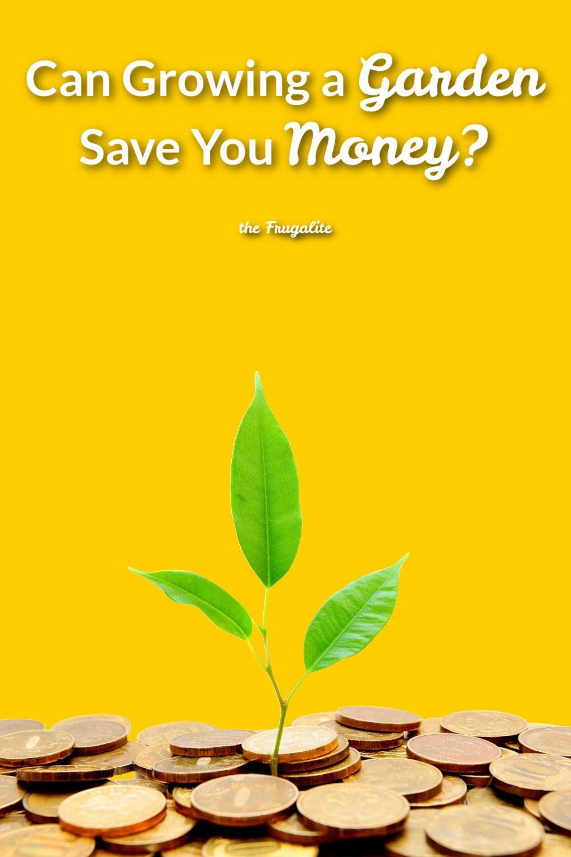 Can You Save Money Growing a Garden?